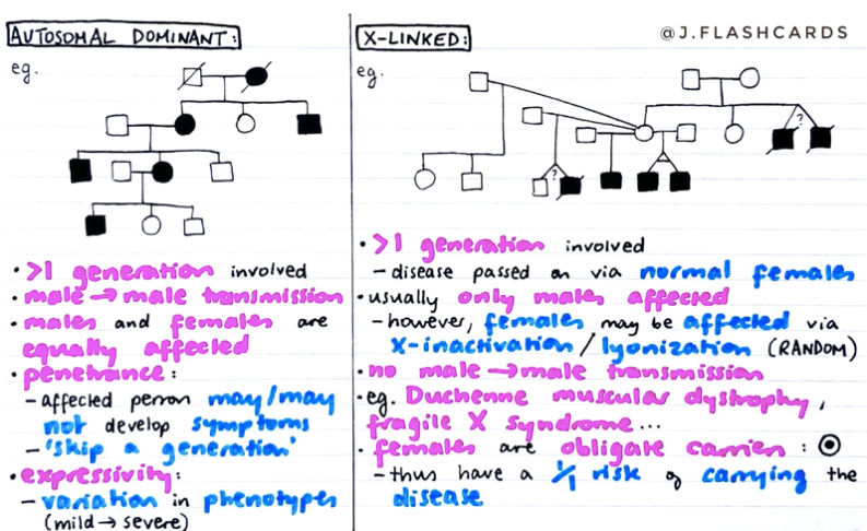 Genetics 1 Flashcards (PDF)