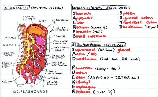 GI Anatomy Flashcards (PDF)