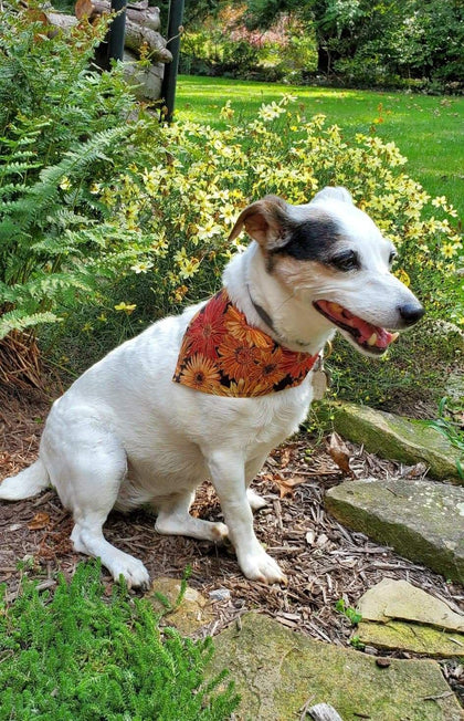 Krazy G Slip Thru the Collar Bandanas...  Happy Fall Y'all