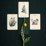 Great Bear Oracle Cards
