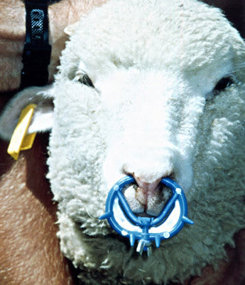 EzWean Nosering for Lambs