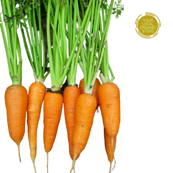 Carrot Otty (Bangalore Only)