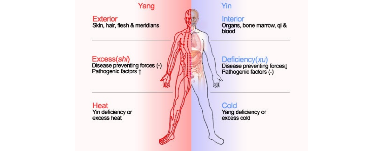 yin yang balance in human body