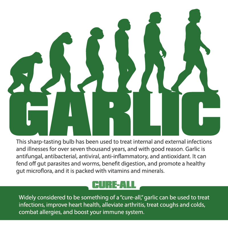 Garlic Infographic