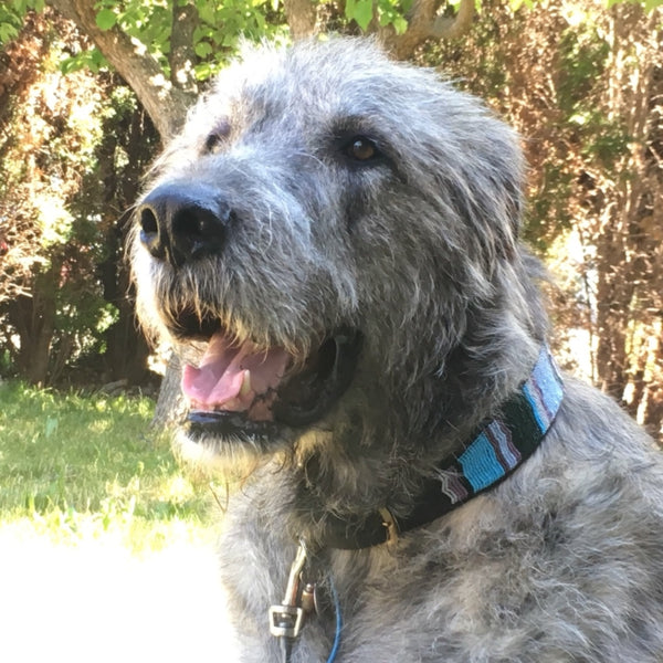 Rest in Peace, our darling Wolfhound