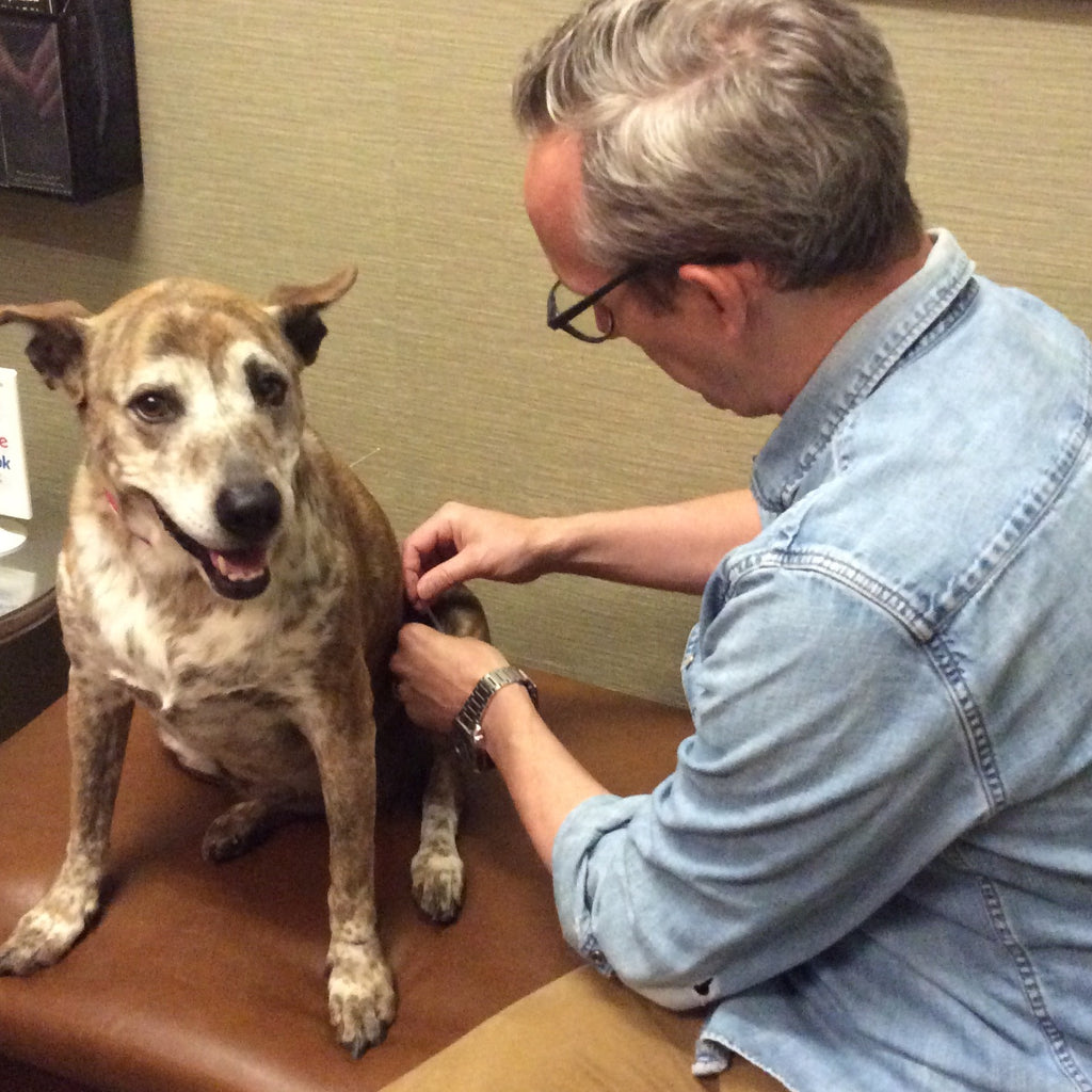 Holistic Acupuncture Care for Pet Arthritis
