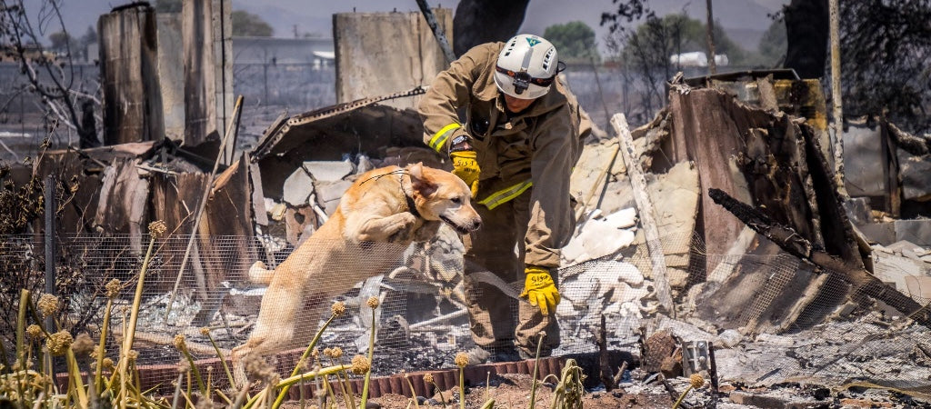 Keep your pets safe during fire season