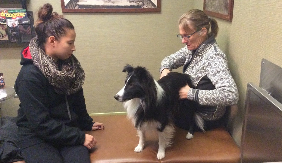 Holistic Care for Pet Arthritis: Chiropractic Care
