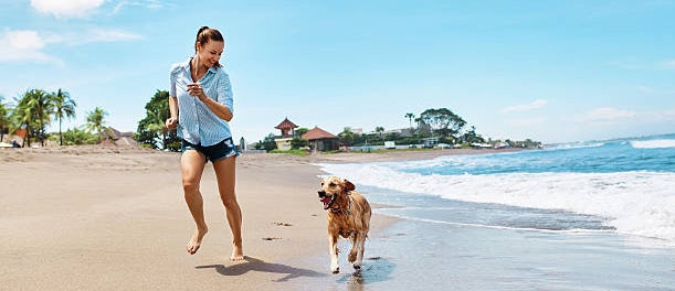 5 Essential Pet Travel Trips for Sunseeker & Snowbirds