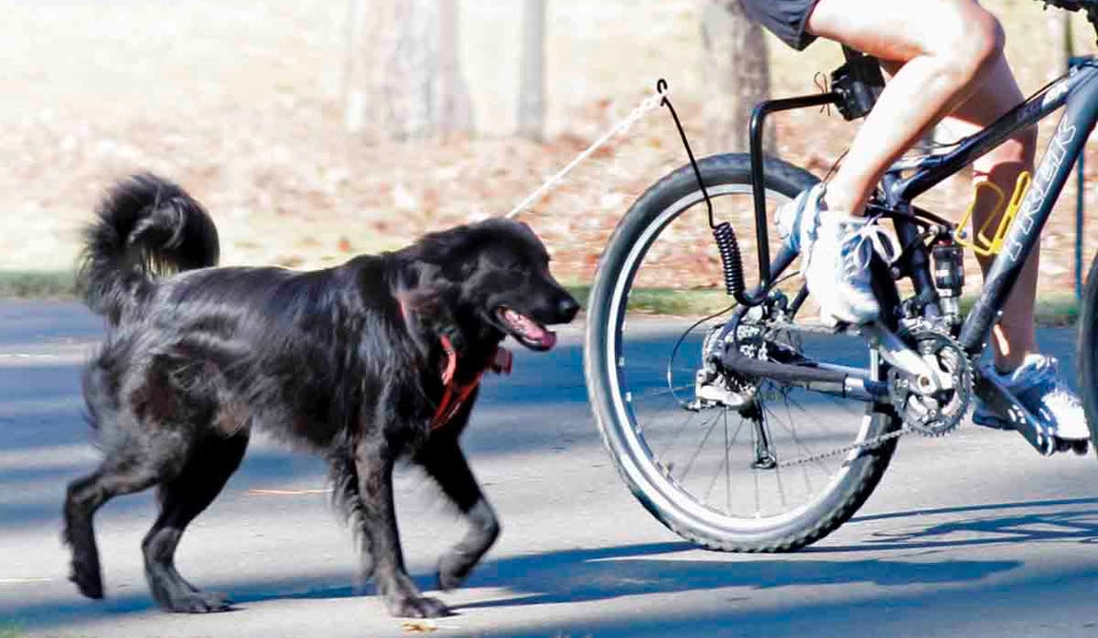 Win Pet Biking Gear! Free Breakfast for Bikers!