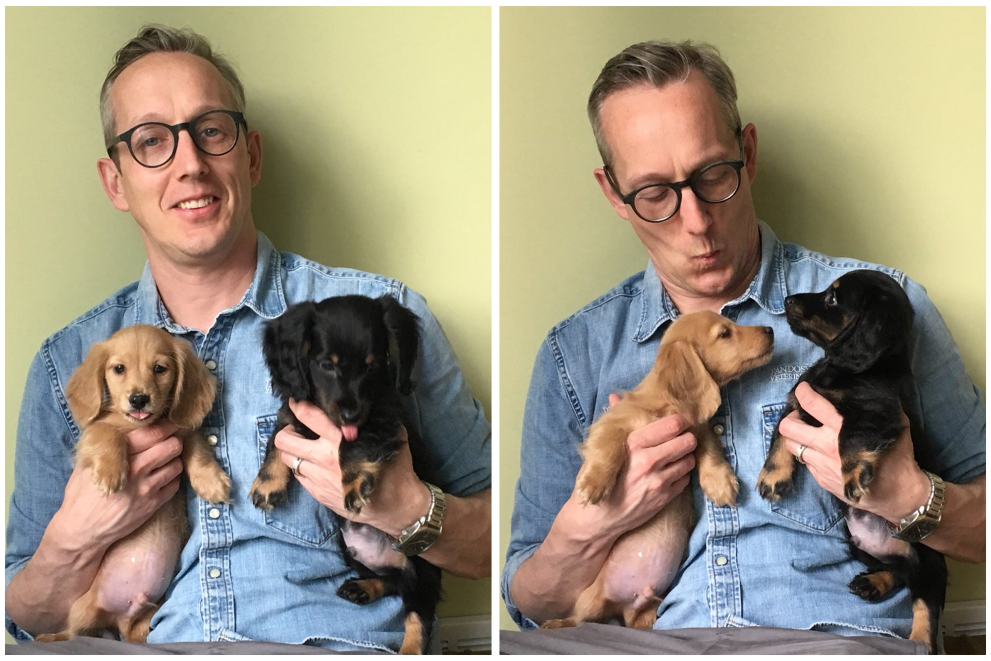 Dr. Jason's New Puppies