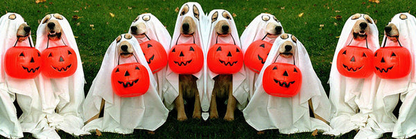 Oct 31 - Trick or Treating for Pets at Pandosy Vet!