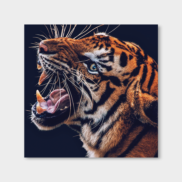 Tiger ROAR (mirrored)
