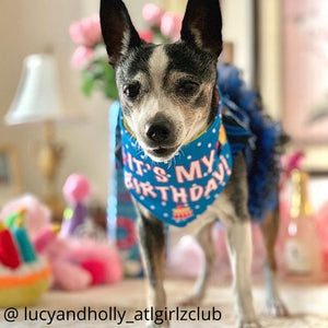 Dog Wearing It's My Birthday Reversible Dog Bandana