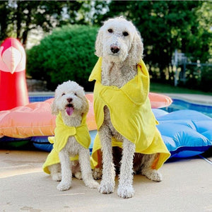 Dogs in Dripping Dog Bathrobes After a Swim