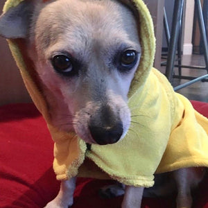 Small Dog in a Dripping Dog Bathrobe