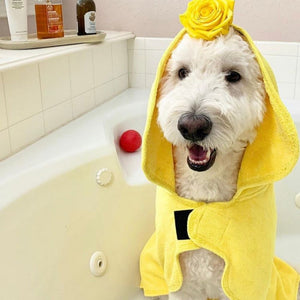 Dog in Yellow Dripping Dog® Bathrobe After a Bath