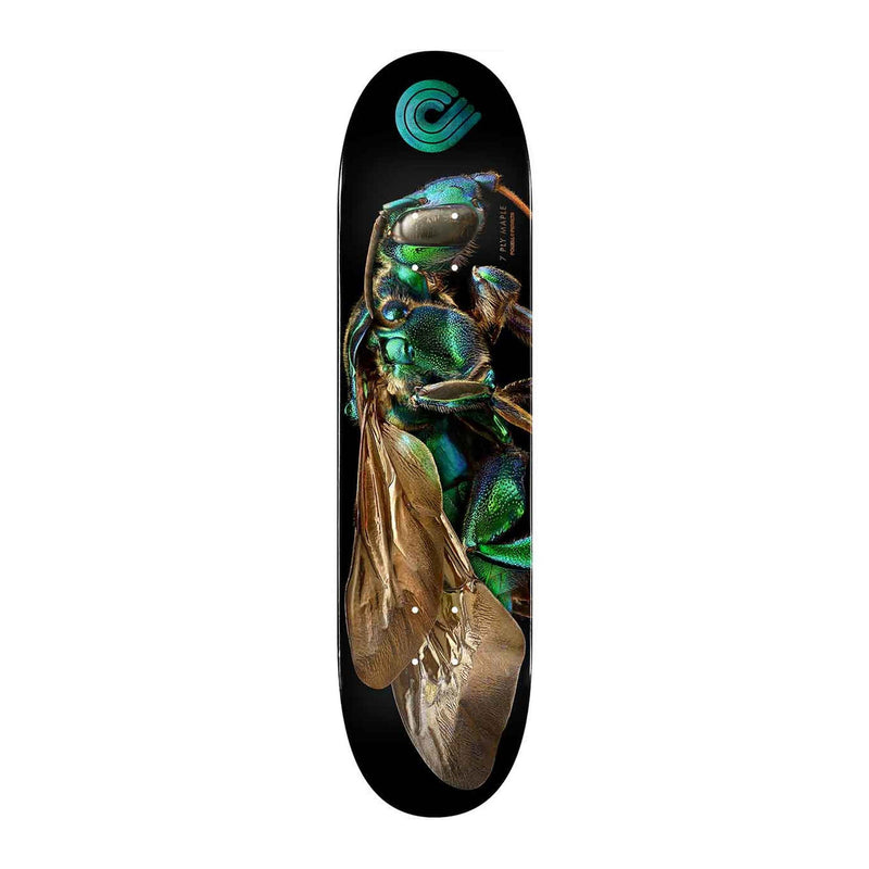 Powell Peralta Cuckoo Bee Deck Product Photo