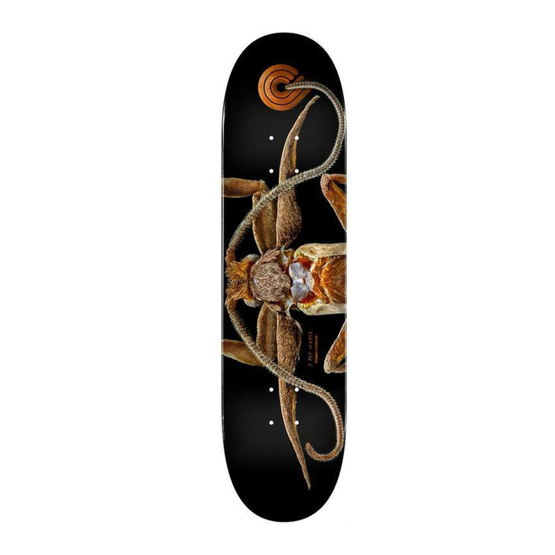 Powell Peralta Marion Moth Deck Product Photo