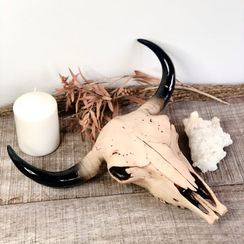Cow or bull skull wall decor