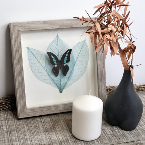 Butterfly and dried leaf art framed