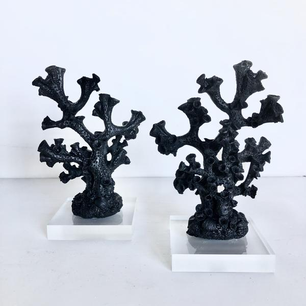 Gift, decor and crystal shop Australia: Coral decor black on stand