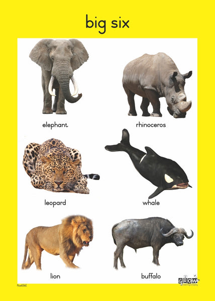 Theme - Wild Animals - Foundation Phase
