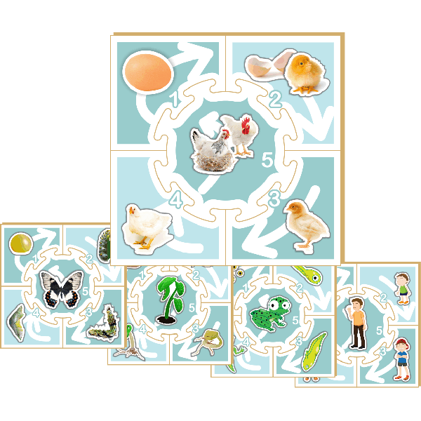 Life Cycle Puzzle Game