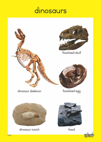 Theme - Dinosaurs (Set of 4)