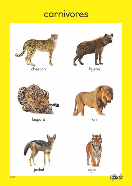 Theme - Wild Animals (Set of 7)