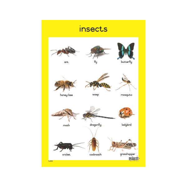 Theme - Insects - A3 Single Chart