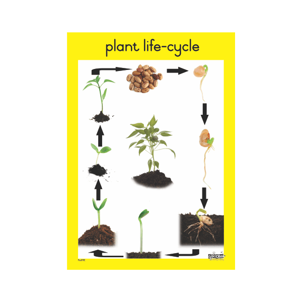 Theme - Plants - A3 Single Chart