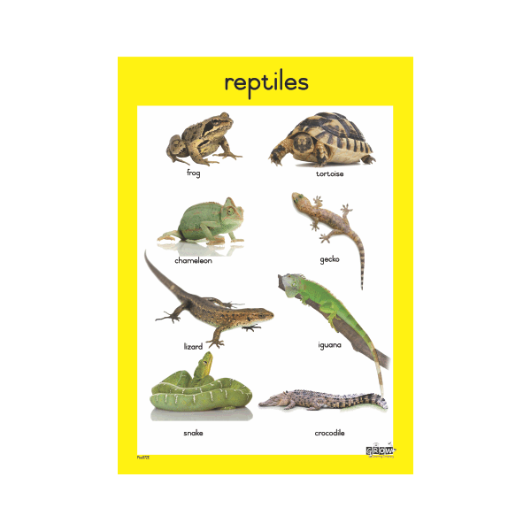 Theme - Reptiles - A3 Single Chart