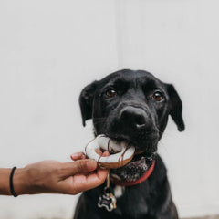 Hand-feeding your dog table scraps is a great way to teach your dog to be a picky eater