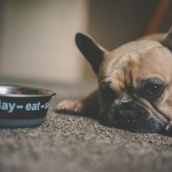 Sudden changes in a dog's diet can reinforce pickiness and sometimes result in diarrhea