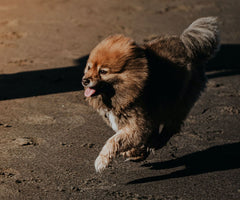 From the tiniest, most energetic puppies to distinguished furry seniors, they seem to gobble up pretty much anything you put in front of them—any time, anywhere.
