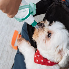 giving your dog adequate fluids every day, you ensure that the synovial fluid (the thick lubrication located between the joints, gives our dogs a cushion