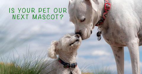 """Older white dog nuzzling smaller white puppy among the long grass and blue cloud strewn sky.  Words saying """"Is your pet our next mascot?"""""""