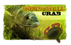 Bombshell Crabs  Lures - Soft Plastics Castalia Outdoors - Hook 1 Outfitters/Kayak Fishing Gear