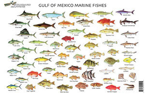 STANDARD FISH CHART GULF OF MEXICO  Fishing Accessories Standard Map - Hook 1 Outfitters/Kayak Fishing Gear