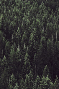 Idaho Forest