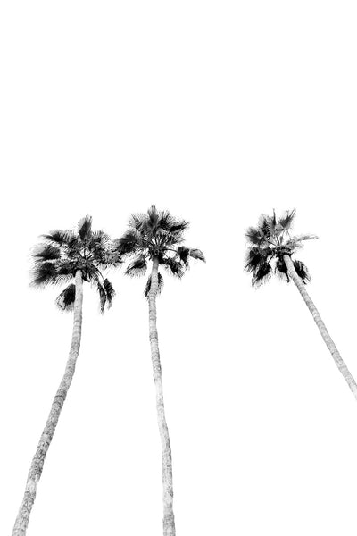 Black and White Palms