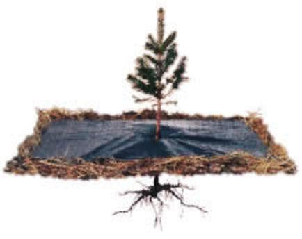 A brush blanket being used on a tree