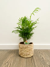 Load image into Gallery viewer, Chamaedorea Elegans in Non-Lined Boho Basket