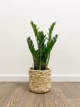 Load image into Gallery viewer, Zamioculcas zamiifolia (ZZ Plant) in Non Lined Boho Basket