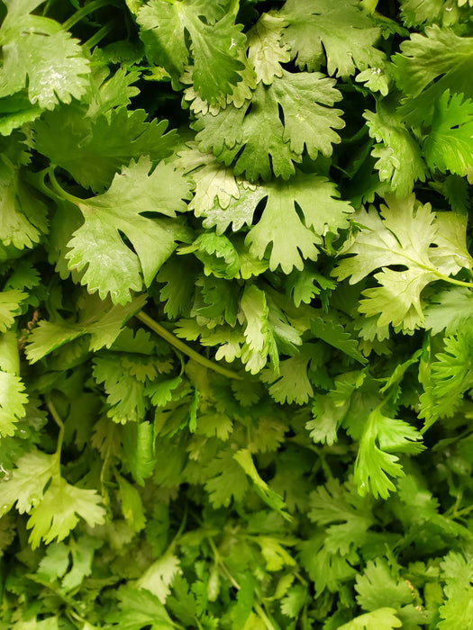 Coriander Leaves Raw (200-280 GM)