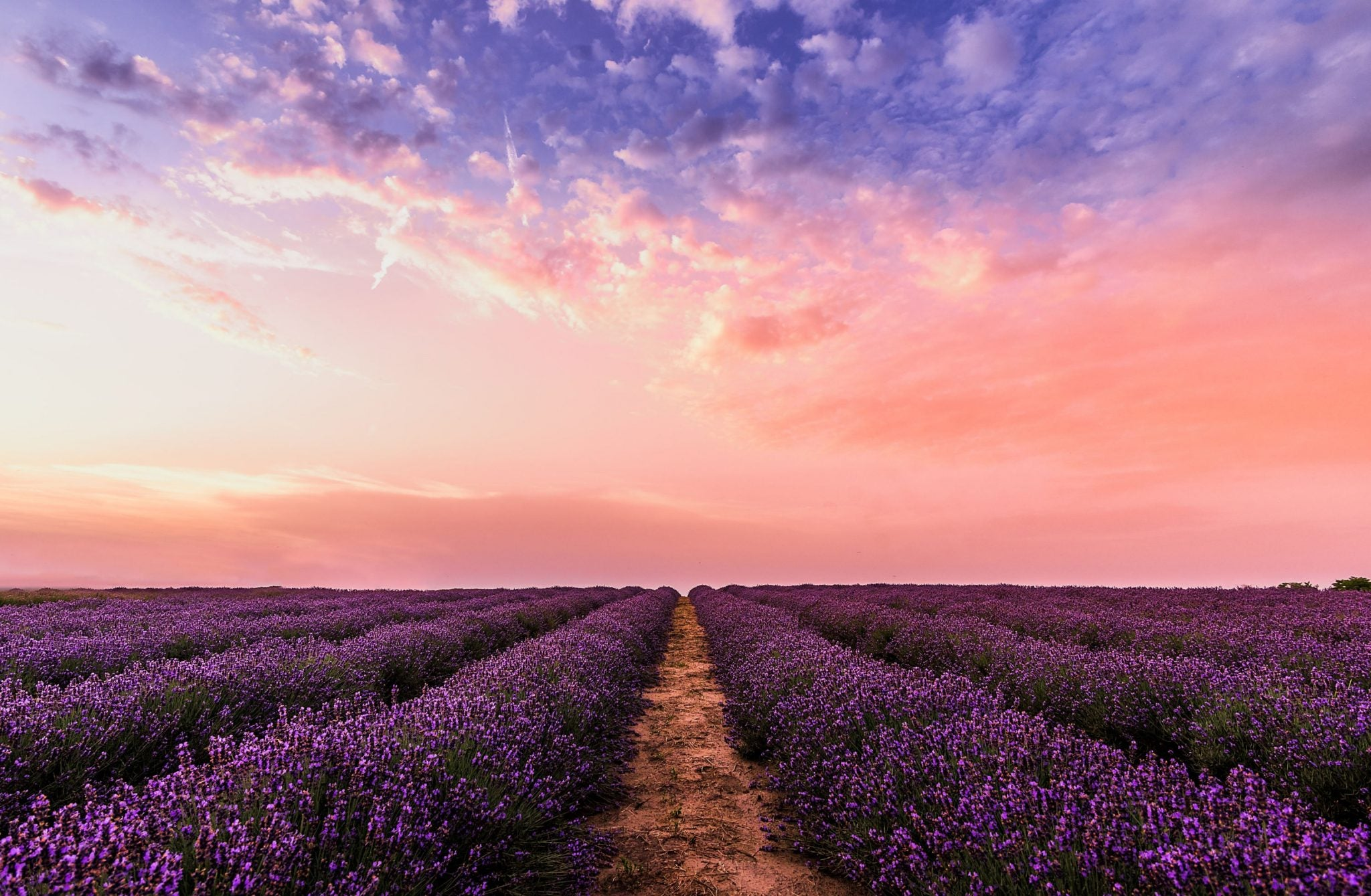 Benefits of Lavender for Relaxation #essentialoils #lavender #wellness