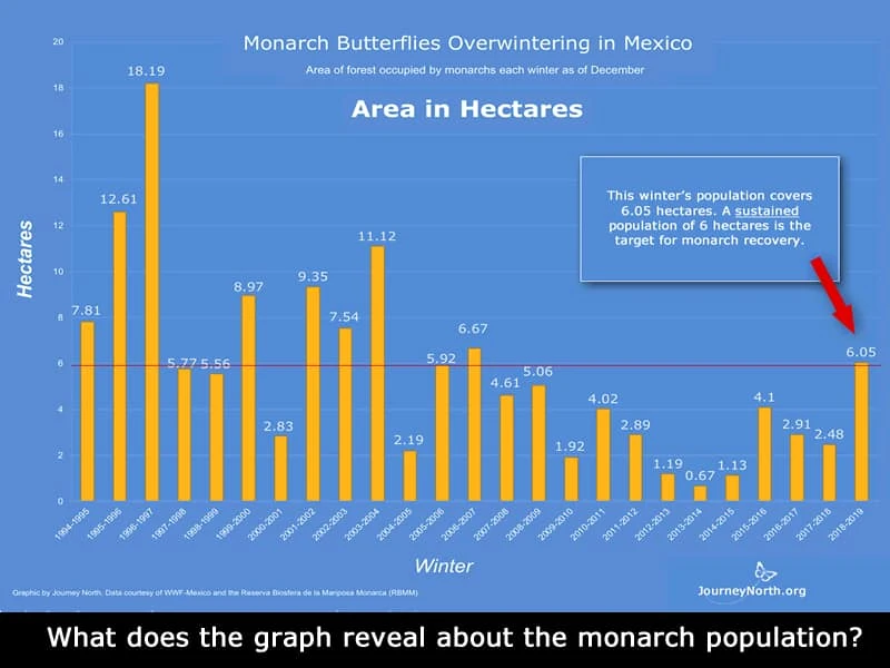 Evolution of area occupied by monarch butterflies from 1994 to 2019.