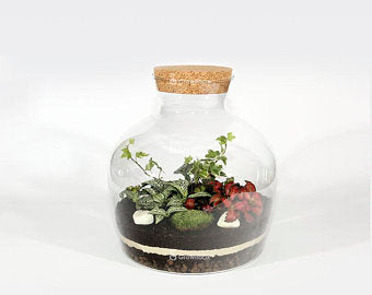 Kit Terrarium DIY Green Sphere – Niveau 1 (facile)