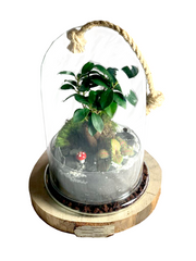 Kit Terrarium DIY The Green Bell - niveau 1 facile